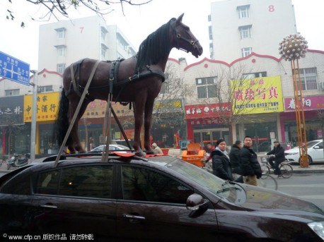 Police gets Jumpy about Horse on Car in China