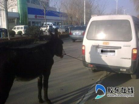 Donkey China