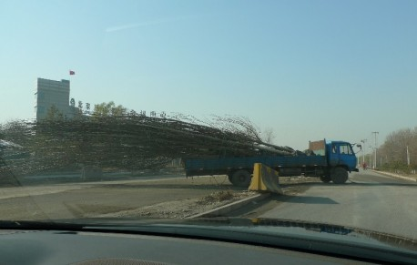 Transporting a Big Tree, the Chinese Way