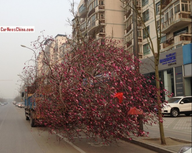 Tree on a Truck in China