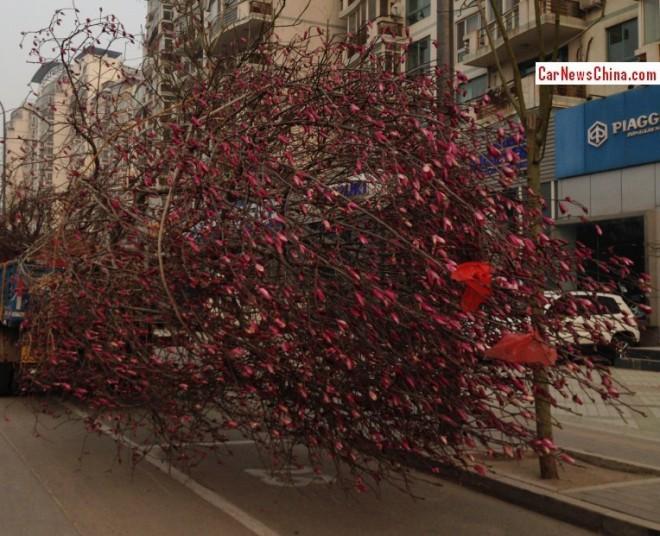 truck-tree-china-2