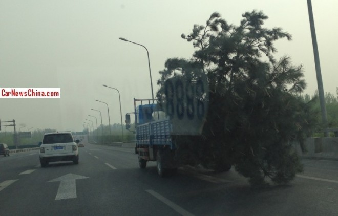 tree-china-move-2