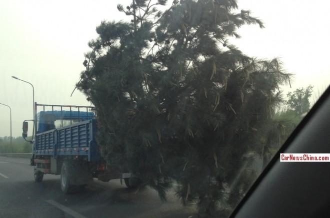 tree-china-move-3