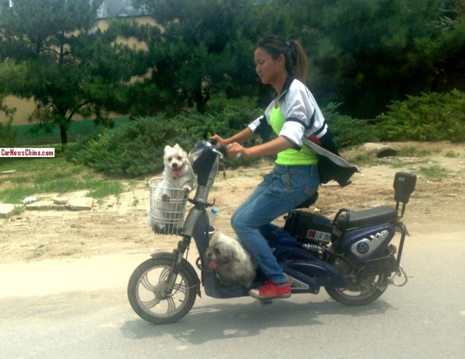A girl with two wite dogs on a electric bicycle in Beijing