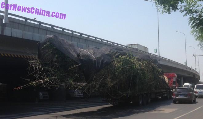 truck-tree-china-bj-4