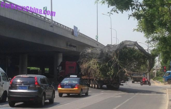 truck-tree-china-bj-6